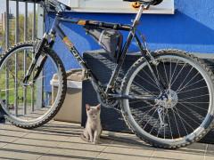 Predám Scott Bike