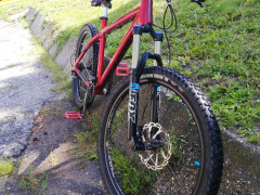 Dartmoor Hornet