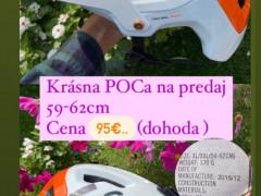 Prilba Poc