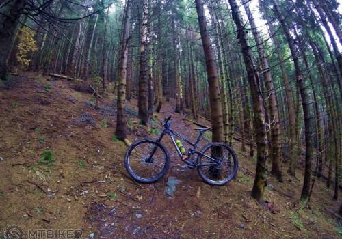 V lese, tam kde patrí