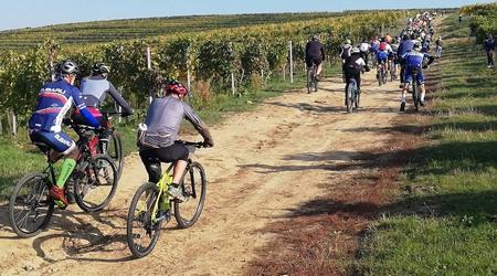 Reportáž: Baynach MTB Marathon – cyklistika uprostred viníc