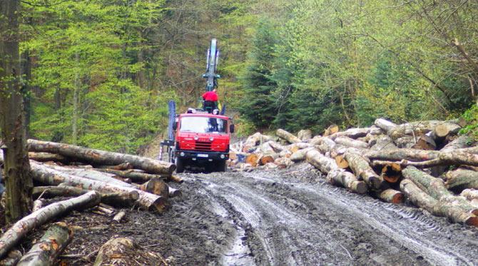 Video: My sme les. Pridaj sa aj ty.