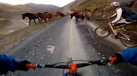Bikom v Peru