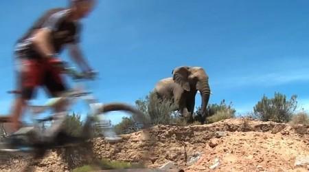 V Južnej Afrike na biku