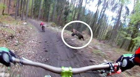 Video: Medveď na otváračke bikeparku Malinô Brdo