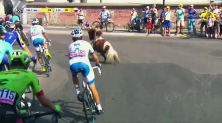 Video: Pozor, kôň na trati...