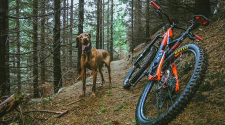 Video: Pes – najlepší priateľ bikera