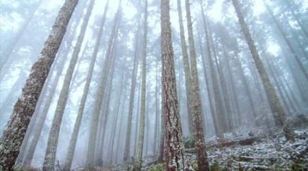 Trevor Thew - Shredding Mt. Tzou