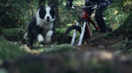 Kaia – najrýchlejší trailový pes v histórii