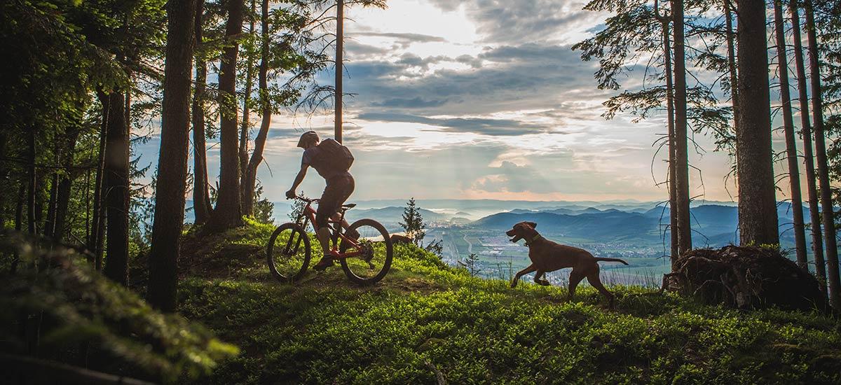 Pes: najlepší priateľ bikera – alebo ako si vychovať svojho traildog-a